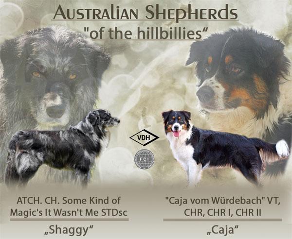 Australian Shepherd Welpen 380euro Zu Teuer Tierforum De Toy Australian Shepherd Australian Shepherd Australian Shepherd Dogs